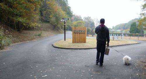 2010 11 14ドッグラン.jpg