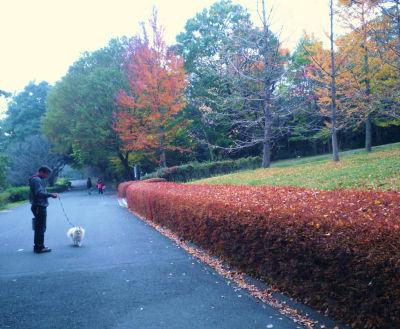 2010 11 14紅葉.jpg