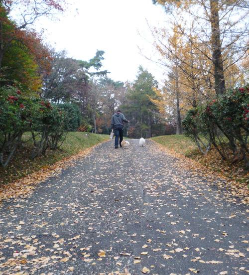 2010 11 14紅葉の道.jpg