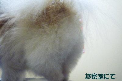 2011 01 20 診察室にて-1.jpg