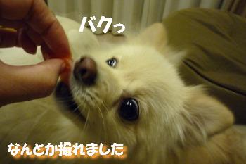 あろー-4.jpg