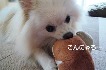 おもちゃと格闘中あろー.jpg