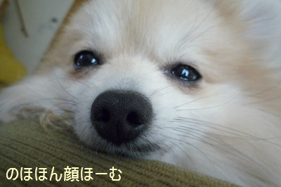 のほほん顔ほーむ.jpg