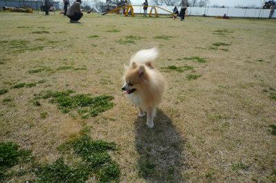 名犬牧場-2.jpg
