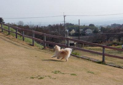 名犬牧場-3.jpg