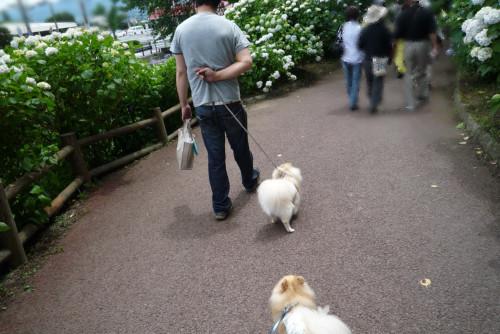 小野池あじさい公園-10.jpg