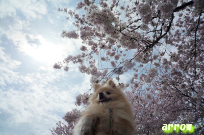 桜とあろー.jpg
