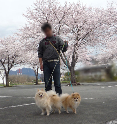 桜と一緒に.jpg