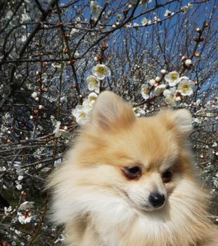 梅の花とほーむ.jpg