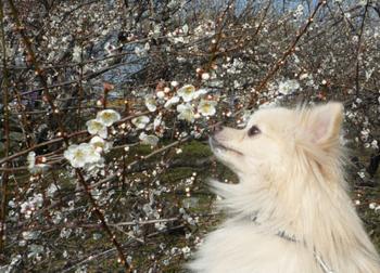 梅の花を食べたそうなあろー.jpg