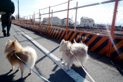 2011 01 01 さんぽ-6.jpg