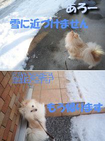 あろーは雪が苦手.jpg