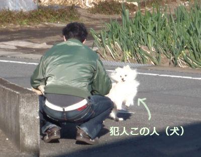 おさんぽ前-2.jpg