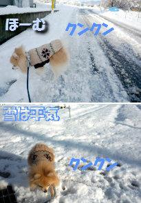 ほーむは雪平気.jpg
