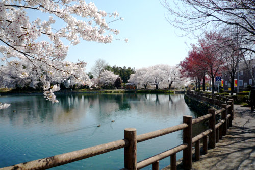 三ツ寺公園-5.jpg