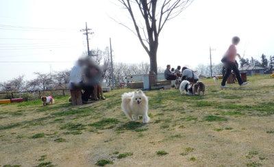 名犬牧場-1.jpg