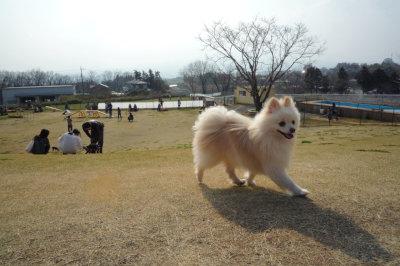 名犬牧場-4.jpg