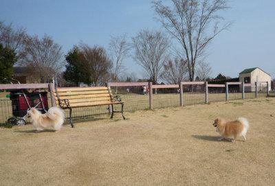 名犬牧場-5.jpg