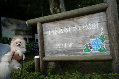 小野池あじさい公園入り口.jpg