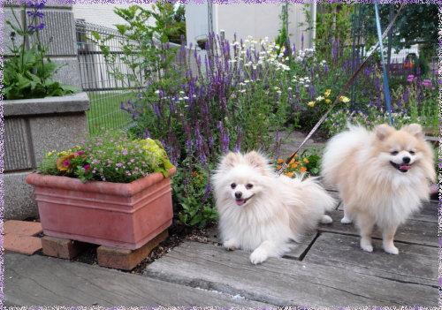 庭で。.jpg