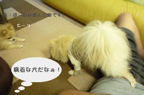 横着な犬.jpg