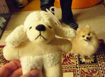 羊のおもちゃNEW.jpg