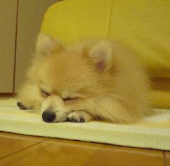 眠っているほーむ.jpg